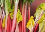 Rhubarb 'Cawood delight'