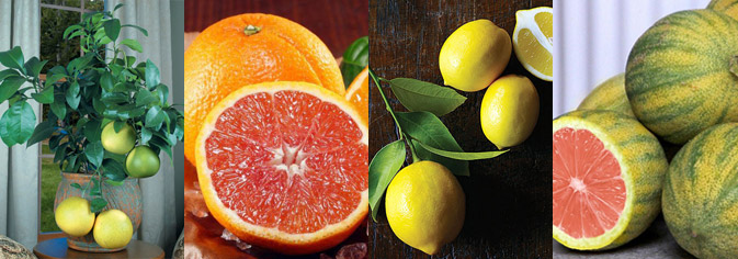 Citrus and other exotic plants
